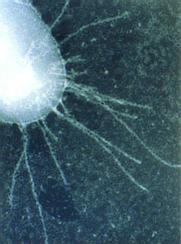 micro-electron-181x244