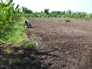 Tanah bekas tanaman sayuran di tanah gambut, Sg Leman