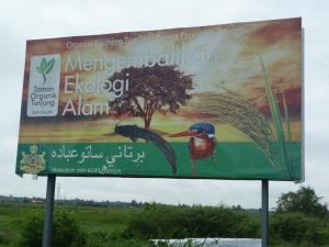 taman organik tunjong, padi organik, kelantan, tunjong, beras organik, organik, beras, padi sri