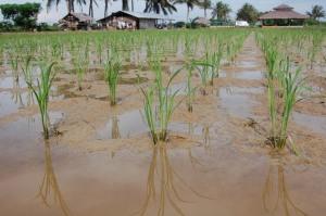 Keadaan Tanah Selepas Dilandak