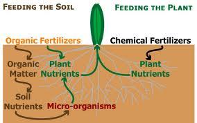 Peranan Baja Organik vs Baja Kimia