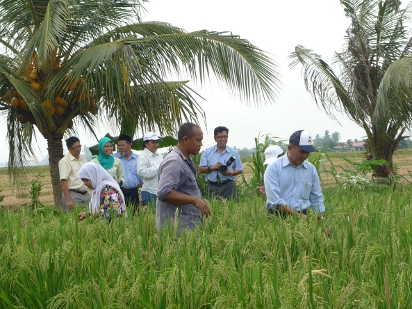 PPN Selangor Turun Ke Petak Padi SRI