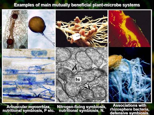 Pelbagai Mikro Organisma Dalam Tanah