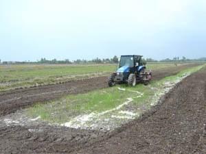 Membajak Membantu Untuk Menggaul Kapor Kedalam Tanah