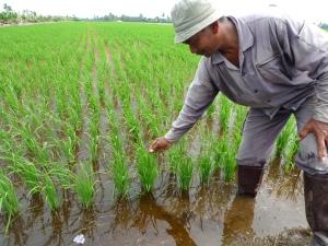 Encik Rosli Teruja Kesan Positif FPJ Kangkung Terhadap Padinya