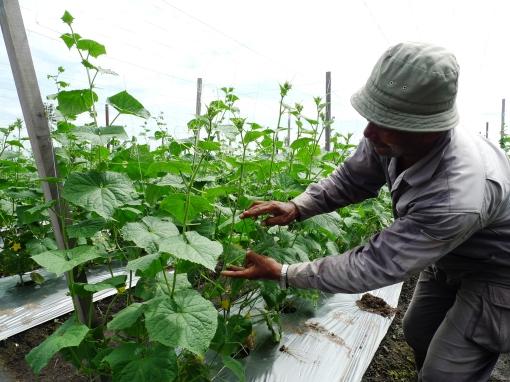 Encik Rosli Menunjukkan Kesan Positif Baja Organik