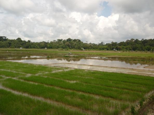 Kawasan Sawah Wasan, Brunei
