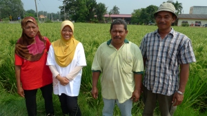 Padi SRI Selangor : Petani Daripada Parit 9, Sg Leman