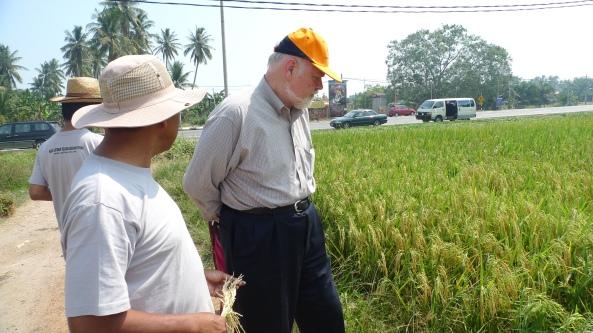 Padi SRI Selangor : Pak Tam Briefing Prof Dr Norman Uphoff At Raja's Field