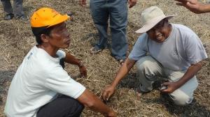 Padi SRI Selangor : Pak Keribo dan Pak Tam Menggenggam Tanah Sawah