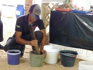 Padi SRI Selangor : Tumbuk Siput Sampai Hancur