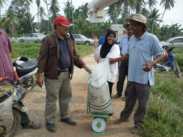 Padi SRI Selangor : Apa Yang Menggembirakan Mereka?