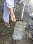 Padi SRI Selangor : Alat melandak diperbuat daripada kayu dan paku.