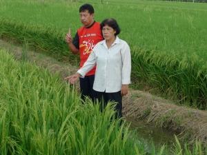 Padi SRI Selangor : Bunga Padi SRI Menjulang Tinggi
