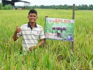 Padi SRI Selangor : Ferozz Toif