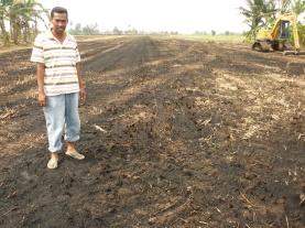 Tanah Sawah Yang Dibakar