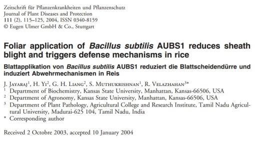 Hawar Daun Dikawal oleh Bacillus subtilis
