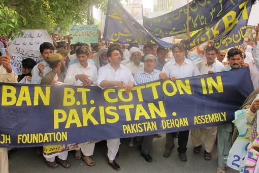 Petani Pakistan Juga Mohon Diharamkan Kapas BT