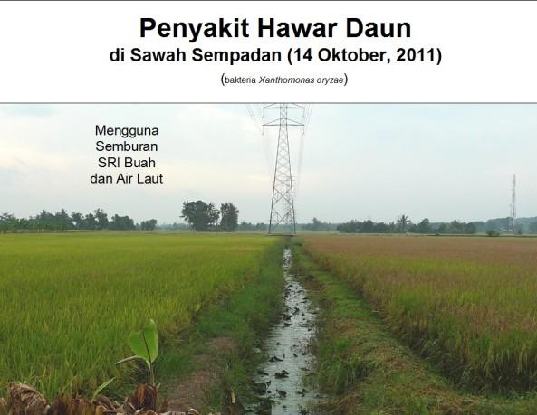 BLB Sawah Sempadan - Produk SRI vs Kimia